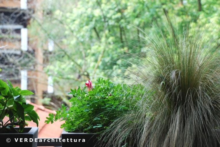 Va_03a_aquilegia-stipa tenuissima