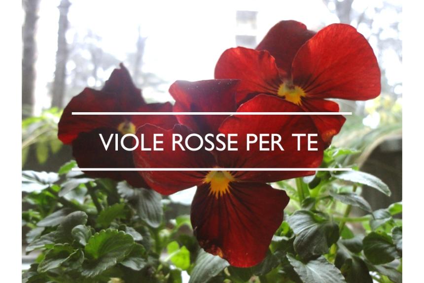 Va_15-01-22_viole rosse per te_01_IMP