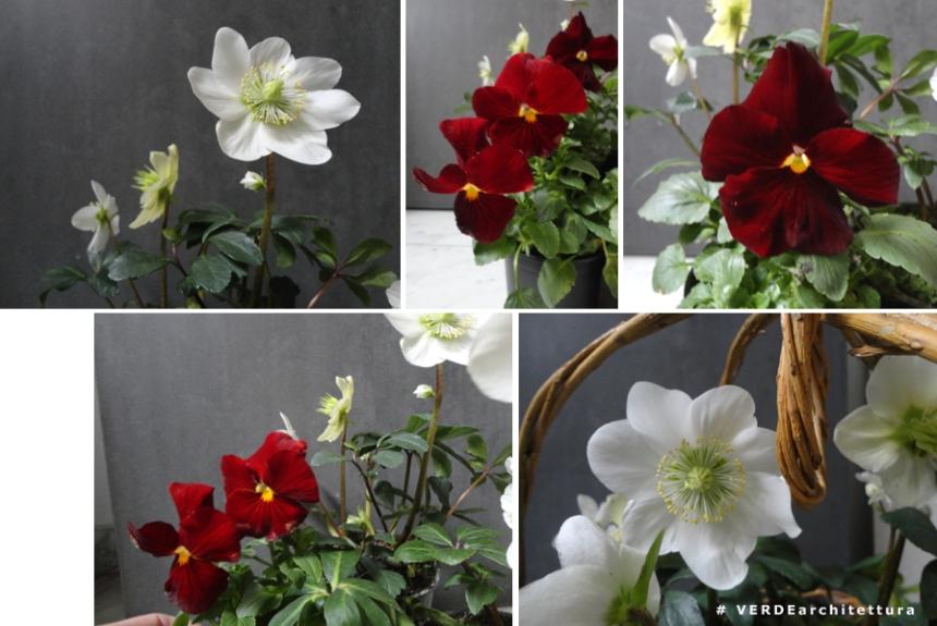 Va_15-01-22_viole rosse per te_03_IMP