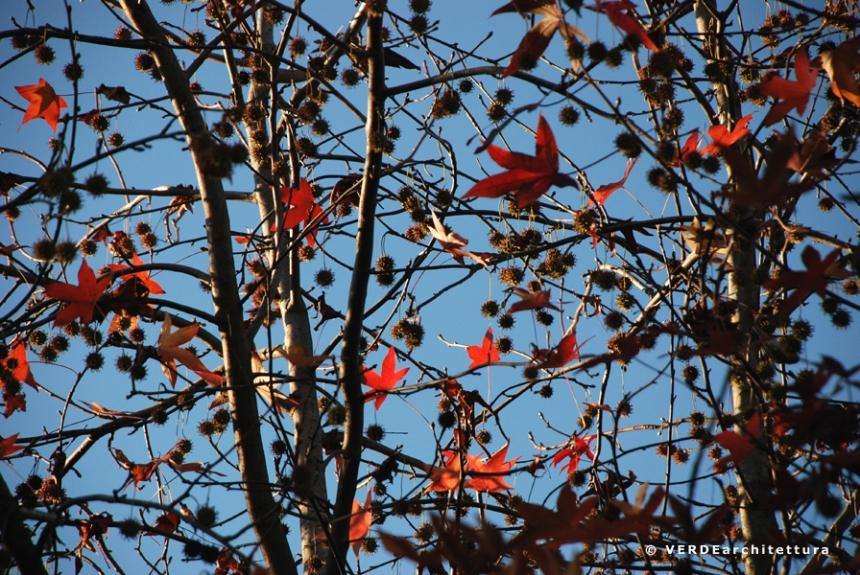 Va_novembre giardino 07_credit