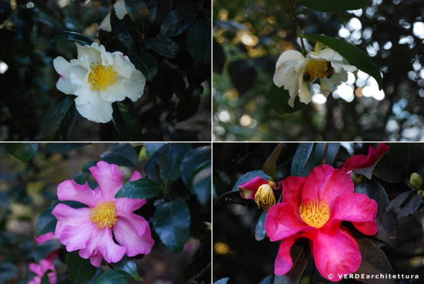 Va_novembre giardino 09_credit