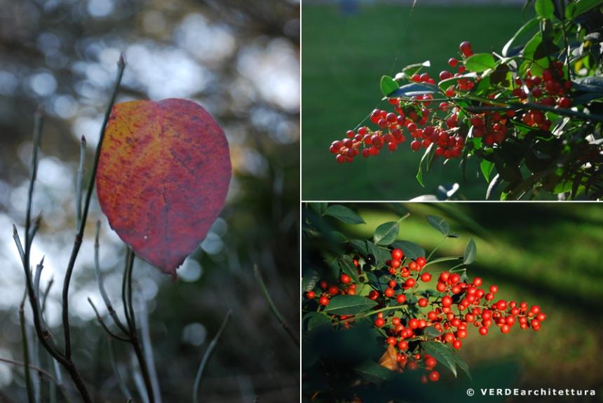 Va_novembre giardino 11_credit