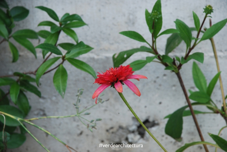 Va_giardino erbe aromatiche_06