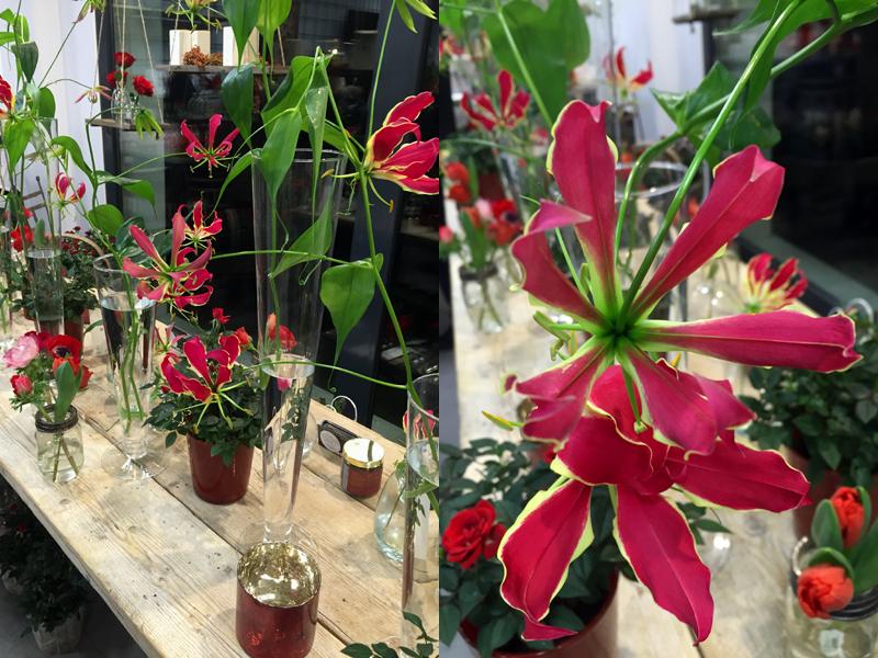 VERDEarchitettura_blog_03_anna flower designer-gloriosa rothschildiana