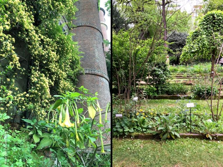 Va_08_orto botanico brera_rosa banksia brugmansia