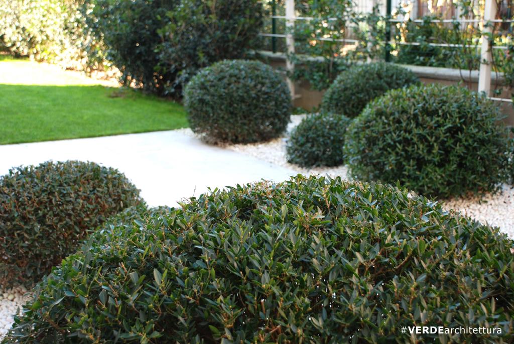 Piante perenni verdearchitettura - Progetto piccolo giardino ...