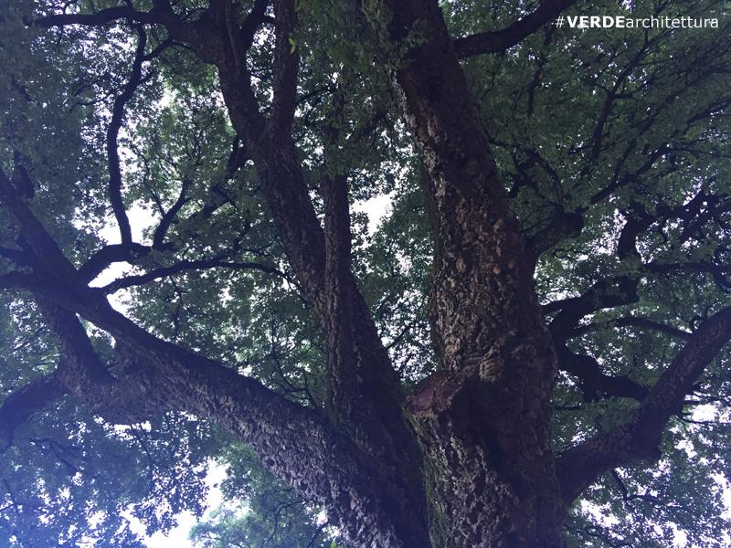 va_quercus-suber-alentejo-01